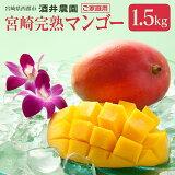 【ふるさと納税】酒井農園 完熟マンゴー1.5kg「訳ありご家庭用」