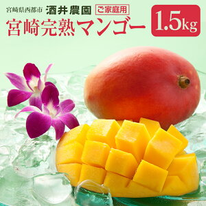 【ふるさと納税】酒井農園 完熟マンゴー1.5kg「ご家庭用」【先行予約】