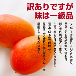 【ふるさと納税】酒井農園 完熟マンゴー1.5kg「ご家庭用」【先行予約】 画像1