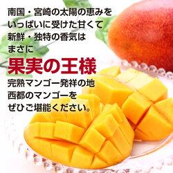 【ふるさと納税】酒井農園 完熟マンゴー1.5kg「ご家庭用」【先行予約】 画像2