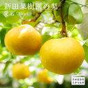 【ふるさと納税】宮崎県産特選 新田果樹園の梨 愛宕(5kg)