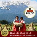 【ふるさと納税】小清水米玄米30kg平成30年産お米ミネラルたっぷりギフト送料無料
