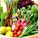 【ふるさと納税】綾町 旬 新鮮 野菜 無農薬 減農薬 お試し 詰め合わせ 採れたて おまかせ ギフト セット 美味しい(1回)