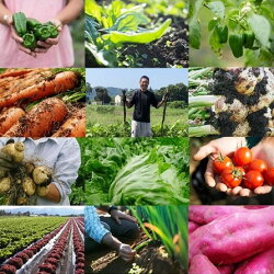 【ふるさと納税】綾町 朝どれ お野菜セット(Sサイズ) 旬 ギフト セット 詰め合わせ お試し 新鮮 美味しい 農家 直送 画像2
