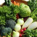 【ふるさと納税】綾町 朝どれ お野菜セット(Sサイズ) 旬 ギフト セット 詰め合わせ お試し 新鮮 美味しい 農家 直送
