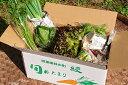 【ふるさと納税】こだわり農家の野菜&ジャムセット