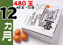 【ふるさと納税】児湯養鶏自慢の卵 計480個(40個×12回...