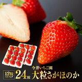 【ふるさと納税】宮崎県産苺!「大粒」さがほのか