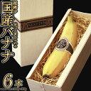 【ふるさと納税】テレビで話題のバナナ! そのままガブリ!皮まで食べられるバナナ「NEXT716」6本入り 生産者こだわりの逸品(レギュラーサイズ:120g〜180g)