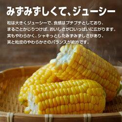 【ふるさと納税】とうもろこし『ゴールドラッシュ』約7kg(都農町産) 画像2