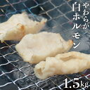 【ふるさと納税】J-5 白ホルモン 約1.5kg