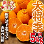 大将季【5kg】【鹿児島いずみ農業協同組合】3-9