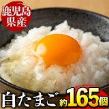 【ふるさと納税】鹿児島県産の白たまご約10kg(約165個・Mサイズ)養鶏の専門農協で一貫して生産された国産生卵!【マルイ食品】