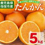 【ふるさと納税】<期間限定・数量限定>鹿児島県指宿市産のみかん!開聞たんかん(5kg)果汁が多く濃厚な甘みが特徴のミカン!国内産オレンジの異名を持つタンカンは酸味とのバランスも良い柑橘♪ギフト・ご贈答にも!【迫田果樹園】