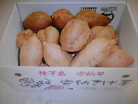 【ふるさと納税】REIMEI種子島安納芋(生芋)5kg