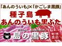 【ふるさと納税】種子島安納芋黒豚焼肉・BBQ・生姜焼き用セット 1kg E