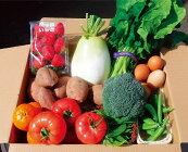 【ふるさと納税】種子島発!旬の野菜と玉子セット