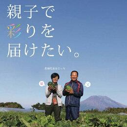 【ふるさと納税】irodori野菜もり畑の野菜詰合せ10
