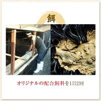 【ふるさと納税】特大うなぎ蒲焼2尾セット【数量限定!!!】