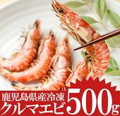 【ふるさと納税】冷凍クルマエビ500g【ヒガシマル】