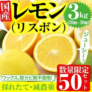 【ふるさと納税】【数量限定】採れたて!ミカン科の国産レモン(リスボン)(3kg) ジューシーで香りの良い減農薬レモン♪【つとむじぃグレープの森】