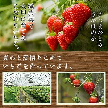 【ふるさと納税】 鹿児島県産イチゴ!さつまおとめorさがほのかをたっぷり約1kg以上!【片平観光農園】