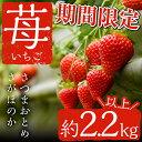【ふるさと納税】 鹿児島県産イチゴ!さつまおとめorさがほのかを約2.2kg以上(380g×2P×3 ...
