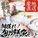 【ふるさと納税】朝獲れ鮮魚の詰め合わせセット!鹿児島県いちき...