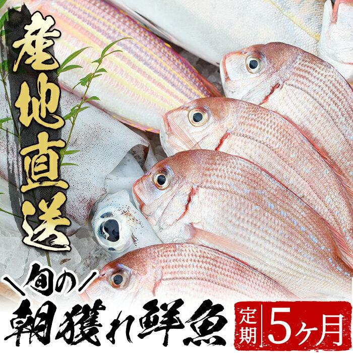 旬の朝獲れ鮮魚コース 5ヵ月定期便