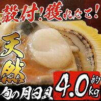 【ふるさと納税】獲れたて!旬の天然月日貝(計約4.0kg・殻付き)【市来えびす市場】
