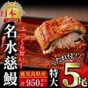 【ふるさと納税】生産量日本一!鹿児島県産うなぎ蒲焼 名水慈鰻...