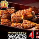 【ふるさと納税】鰻生産量日本一の鹿児島県産!うなぎの大楠<中>4尾セット計520