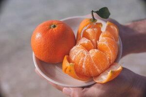 【ふるさと納税】【児玉柑橘園】奄美完熟たんかん優品5kg