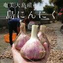 【ふるさと納税】奄美大島産・島にんにくL〜2Lサイズ(生1k