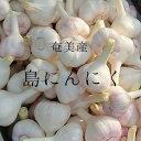 【ふるさと納税】奄美大島産島にんにくMサイズ(生3kg、50〜60コ)