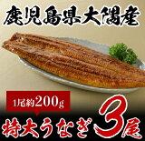 鹿児島県大隅産特大うなぎ(約200g)3尾