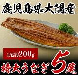鹿児島県大隅産特大うなぎ(約200g)5尾