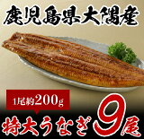 鹿児島県大隅産特大うなぎ(約200g)9尾