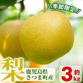 【ふるさと納税】梨(3kg)【市山梨花園】
