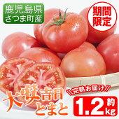 【ふるさと納税】《期間限定》さつま町産の大安吉日とまと(1.2kg)完熟してから収穫した採れたてのトマトをお届け【市囿庄一】