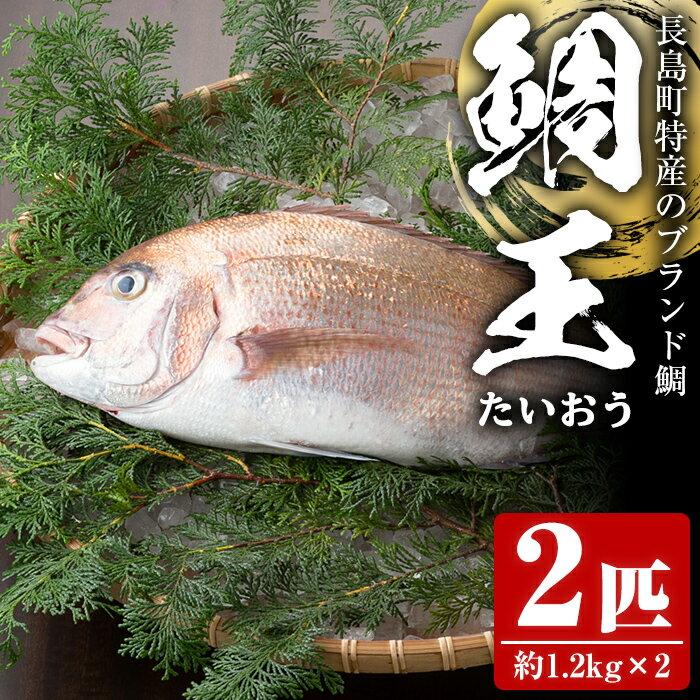 長島町特産の鯛王(2匹セット)_jfa-22