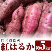 【ふるさと納税】門元農園の紅はるか約5kg_kadomoto-472