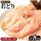 【ふるさと納税】まつぼっくり 若どりムネ肉8kg_ matu-446