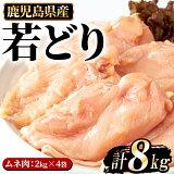 【ふるさと納税】まつぼっくり 若どりムネ肉8kg