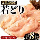 【ふるさと納税】まつぼっくり若どりムネ肉8kg_matu-446
