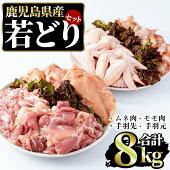 【ふるさと納税】まつぼっくり若どりムネ肉・モモ肉・手羽先・手羽元各2kgセットmatu-454