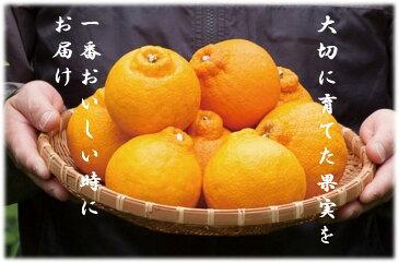 【ふるさと納税】ja-3_長島町特産のデコポン5Kg(ハウス栽培)