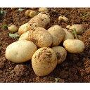 【ふるさと納税】早春長島のミネラル栽培ジャガイモ10kg_eguchi-409