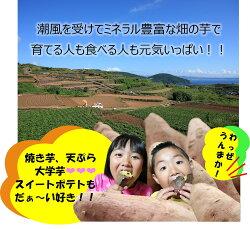 【ふるさと納税】飯尾農園の紅はるか5kg_miio-388 画像2