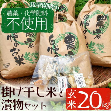 【ふるさと納税】<栽培期間中農薬化学肥料不使用>お米(玄米)20kgと漬物セット【雲月農園】